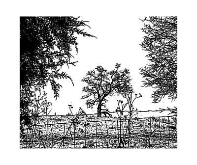 Belinda Landtroop Royalty-Free and Rights-Managed Images - Winter Tree 3 by Belinda Landtroop