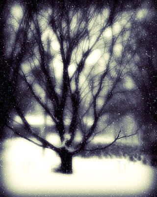 Winter Tree 3 Print by Perry Webster