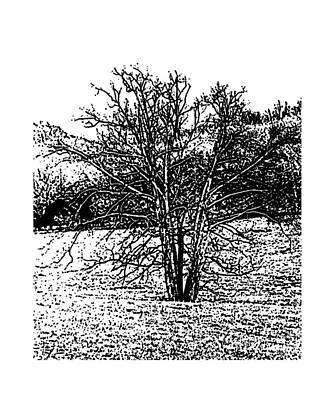 Belinda Landtroop Royalty-Free and Rights-Managed Images - Winter Tree 5 by Belinda Landtroop