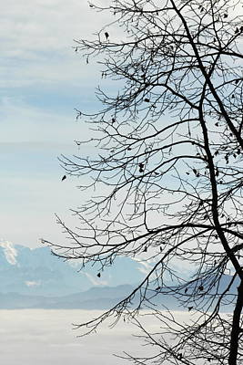 Winter Tree And Alps Mountains Upon The Fog Art Print