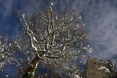 Wall Art - Photograph - Winter Tree And Castle by Andrea Gabrieli