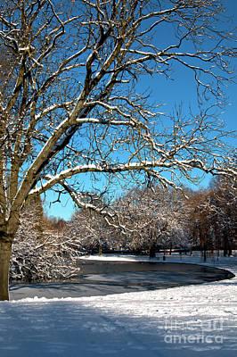 Photograph - Winter Tree by Baggieoldboy