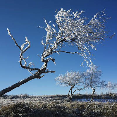 Snow Covered Fields Photograph - Winter Tree. by Bernard Jaubert