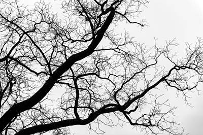 Photograph - Winter Tree by Bill Howard
