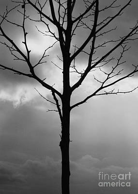 Winter Photograph - Winter Tree by Carol Groenen