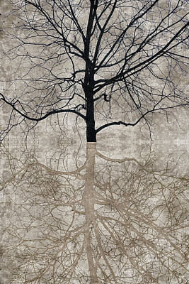 Winter Tree Art Print by Carol Leigh
