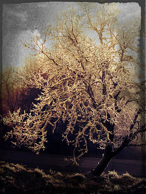 Pdx Art Digital Art - Winter Tree Dark by Cathie Tyler