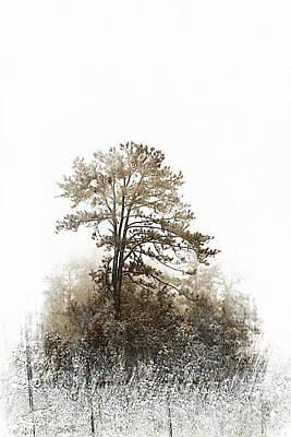 Photograph - Winter Tree by Debbie Green