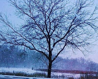 Winter Tree II Art Print by Anna Villarreal Garbis