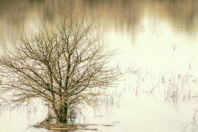 Winter Light Mixed Media - Winter Tree In Water by Terry Davis