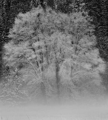 Winter Tree In Yosemite Valley Art Print by Lawrence Knutsson
