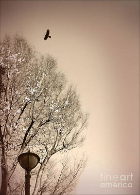 Photograph - Winter Tree by Eena Bo