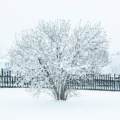 Keith Richards Royalty Free Images - Winter Tree  Royalty-Free Image by Iris Richardson