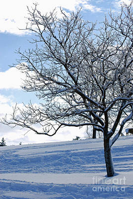 Art Print featuring the photograph Winter Tree by Lila Fisher-Wenzel