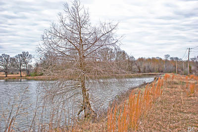 Photograph - Winter Tree On Pond Shore by Gina O'Brien