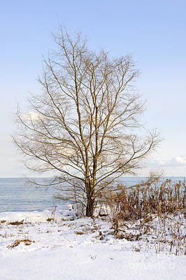 Winter Tree On Shore Art Print by Elena Elisseeva