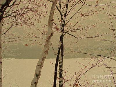 Mixed Media - Winter Tree Over Bay by Desiree Paquette