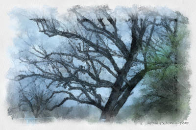 Photograph - Winter Tree by Paulette B Wright