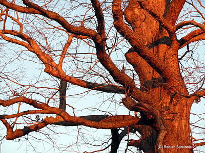 Hood Ornaments And Emblems - Winter Tree by Rabiah Seminole
