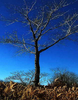 Photograph - Winter Tree by Roger Bester
