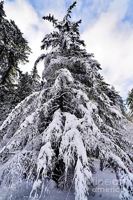 Photograph - Winter Tree Scenes - 1 by Terry Elniski