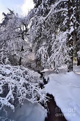 Photograph - Winter Tree Scenes - 2 by Terry Elniski