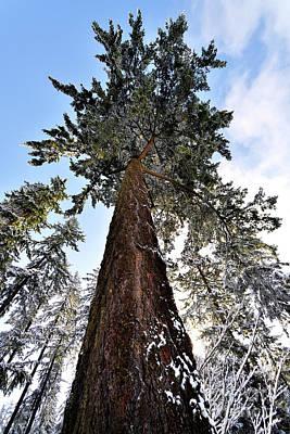 Photograph - Winter Tree Scenes - 5 by Terry Elniski