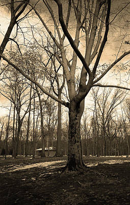 Photograph - Winter Tree Sepia 2018 by Frank Romeo