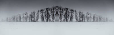Photograph - Winter Tree Symmetry Long Horizontal by John Williams