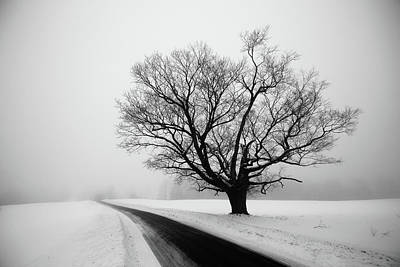 Photograph - Winter Tree by Tim Kirchoff