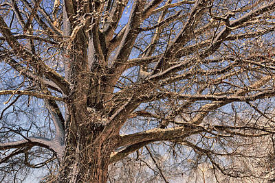 Photograph - Winter Tree by Travis Rogers