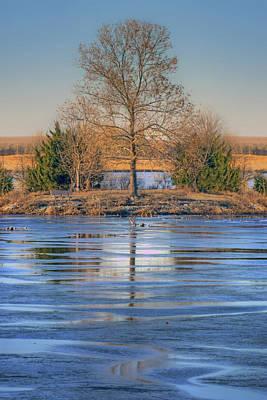 Winter Tree - Walnut Creek Lake Art Print by Nikolyn McDonald