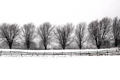 Art Print featuring the photograph Winter Treeline by Don Nieman