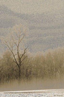 Photograph - Winter Treeline by Everett Bowers