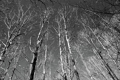 Photograph - Winter Trees 121417 Bw by Mary Bedy