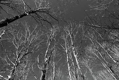 Photograph - Winter Trees 2 121417 Bw by Mary Bedy