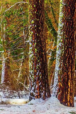 Winter Trees 2 Art Print by Garry Gay