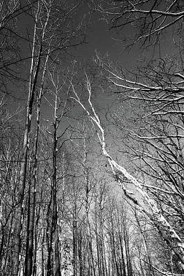 Photograph - Winter Trees 3 121417 Bw by Mary Bedy