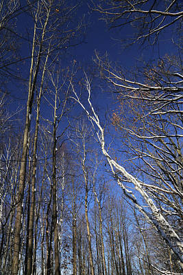 Photograph - Winter Trees 3 121417 by Mary Bedy