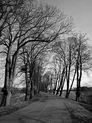 Photograph - Winter Trees - 365-319 by Inge Riis McDonald