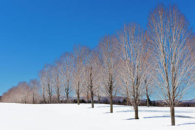 Photograph - Winter Trees by Alan L Graham
