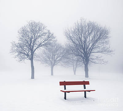 Landscapes Royalty-Free and Rights-Managed Images - Winter trees and bench in fog by Elena Elisseeva
