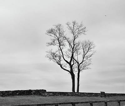 Photograph - Winter Trees And Fences by Nancy De Flon