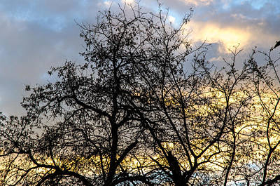 Winter Photograph - Winter Trees At Sunset by Andrea Mazzocchetti