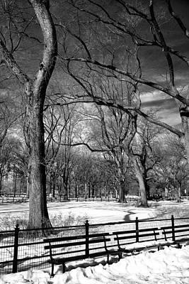 Park Benches Photograph - Winter Trees At The Mall by John Rizzuto