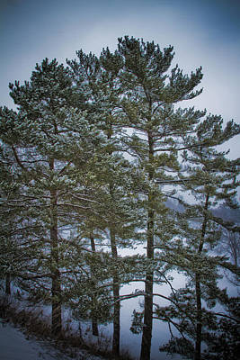Photograph - Winter Trees by Daniel Houghton