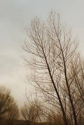 Bare Trees Photograph - Winter Trees by Joseph Smith