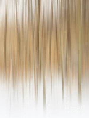 Photograph - Winter Trees by Karin Pinkham