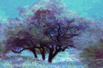 Photograph - Winter Trees by Lori Seaman