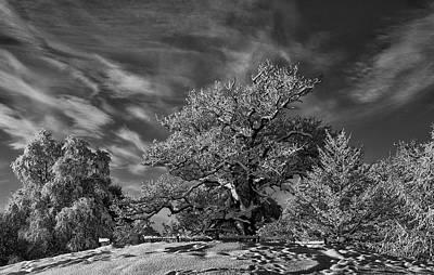 Winter Trees Print by Mark Denham